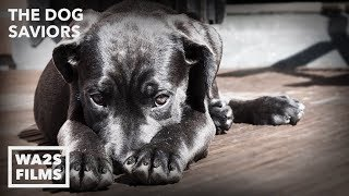 Download Hope For Paws Rescue Starving Scared Dog With Broken Heart - THE DOG SAVIORS Video