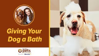 Download Dr. Becker on Giving Your Dog a Bath Video