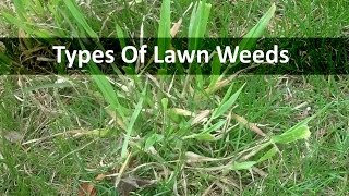 Download Lawn Weeds Video