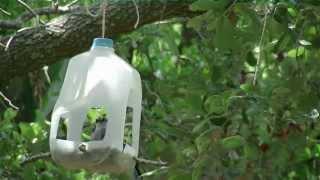 Download DIY Bird Feeder Video