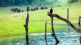 Download Thekkady wildlife sanctuary, Periyar Tiger Reserve - HD | munnar kerala tourism Video