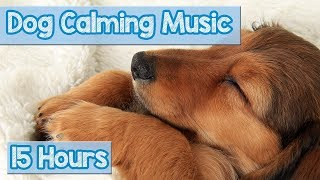 Download Relaxing Nature Sounds for Anxious Dogs! Calm Your Dog with this Natural Anxiety Remedy for Dogs! 🐕 Video