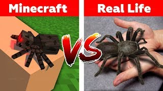 Download MINECRAFT SPIDER IN REAL LIFE! Minecraft vs Real Life animation Video