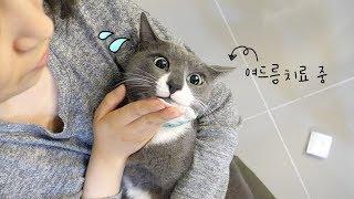 Download 고양이의 턱드름을 짜보아요! (고양이도 여드름이 납니다🙄) Video