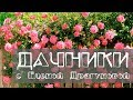 Download Дачники. Как вырастить плетистую розу в Сибири. Как правильно ухаживать за пионами Video