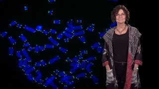 Download Titia de Lange (Rockefeller U.) 1: Telomeres and human disease Video