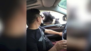 Download Chinese man's complaint after bear attack falls on deaf ears Video