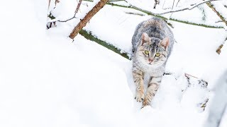 Download LIVE: Happy Forest cats - TinyKittens Video