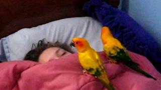 Download the birds waking up my sister Video