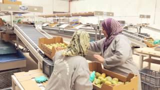 Download Projet d'accès aux marchés des produits agroalimentaires et du terroir - PAMPAT Video