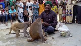 Download बंगाली जादूगर || बन्दर बंदरिया का कमाल देखकर हैरान रह गए सब लोग आप हमारे चैनल को सब्सक्राइब जरूर करे Video