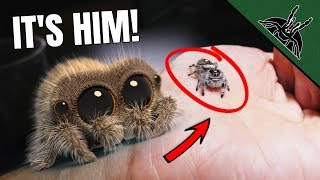 Download REAL LIFE Lucas The Spider - Setting up the enclosure Video