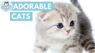 Download You Won't Believe How Cute These Cats Are Video