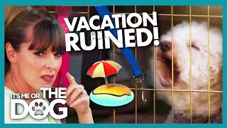 Download Dogs Make Relaxation Impossible on this Vacation | It's Me or the Dog Video
