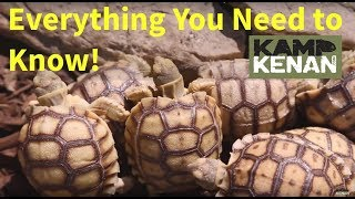Download The ULTIMATE SULCATA Tortoise Care INSTRUCTIONS : Kamp Kenan S3 Episode 34 Video