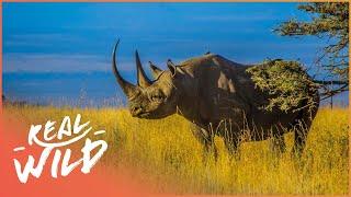 Download Mkomazi The Rhino [Rhino Rescue Documentary] | Wild Things Video