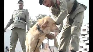 Download Pak Ranger Dog Section Training Pkg By Rizwan Naqvi City42 Video