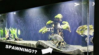 Download Will Pet Bass Spawn in a Fish Tank? Video