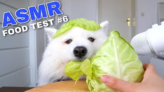 Download ASMR Dog Reviewing Different Types of Food #6 I MAYASMR Video