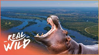 Download The Beautiful Habitants Of The Zambezi River! | Zambezi: Force Of Life | Wild Things Video