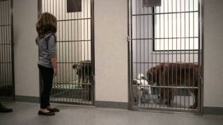 Download Luscious International's Short Film for Sydney Dogs & Cats Home Video