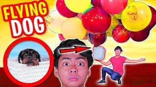 Download MAKING My Dog FLY Using BALLOONS Video