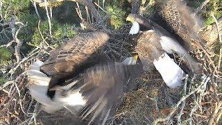 Download AEF-NEFL Eagles ~ Something Spooks Romeo & Juliet ~ 09·25·17 Video
