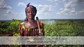 Download FAO's work on protecting, saving & restoring agricultural livelihoods Video