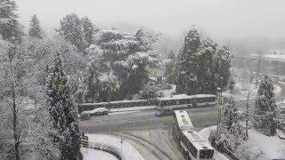 Download Intenses chutes de neige - Genève - 12 février 2016 Video