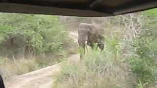 Download Thula Thula Elephant charge Video