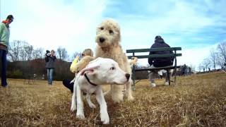 Download GoPro HD: Beautiful Day at the Dog Park Video