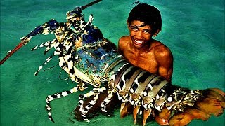 Download Top 5 Biggest Lobsters Ever Caught Video