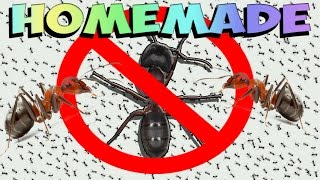 Download How to Get Rid of Ants FOREVER (Natural) Video