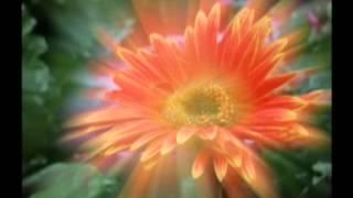 Download lassana raththaran babo mokshi asinsana 2010 Video