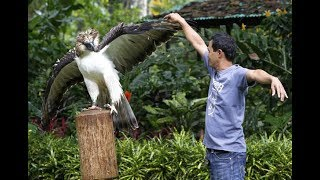 Download 10 Exotic Birds Endemic to The Philippines Video