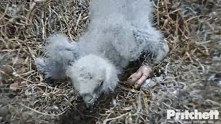Download Southwest Florida Eagles - Daddy Came To Rescue Little E8. Video