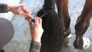 Download Learn How To Braid A Horse's Tail Video