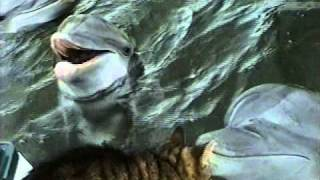 Download Cat and Dolphins playing together Video