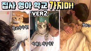 "Download 고양이들의 ""집사 형아, 학교 가지마!"" 시리즈 2탄 (심쿵주의) ENG, BAHASA [베니패밀리] The Series of ″Please, Don't go to school″ Video"