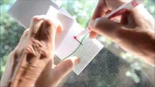 Download How To Make a Quick & Easy Flipbook Flip book Drawing of a Flower Growing Video