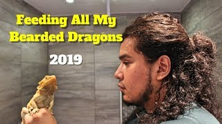 Download Feeding All My Bearded Dragons | Reviewing Bearded Dragon Food 🦎🦎🦎 Video