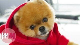 Download Top 10 Dog Breeds That Have The CUTEST Puppies Video