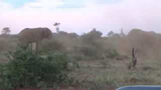 Download Madikwe Game Reserve Video
