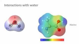 Download Biochemistry 3.0: Water and solubility Video
