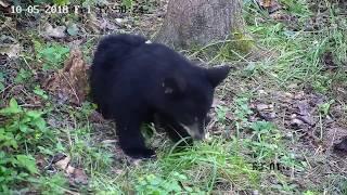 Download Piccola Bear Video