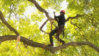 Download Speed Tree Climbing action at Hilux New Zealand Rural Games 2015 Video