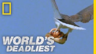 Download Eagle vs. Toxic Snake | World's Deadliest Video