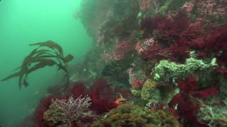 Download The Big Sur Coast Video