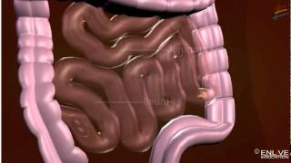 Download Working of Digestive System Video