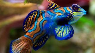 Download Top 20 World's Most Beautiful Fish In The Ocean Video